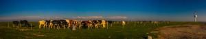 panorama-kuehekllll